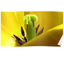 Yellow Tulip Pistil and Stamens - Macro Photography Poster