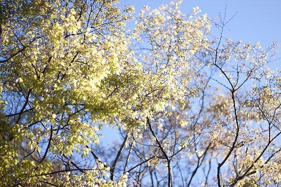 Lightness of Spring by Joseph Miller