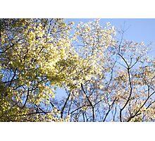 Lightness of Spring Photographic Print