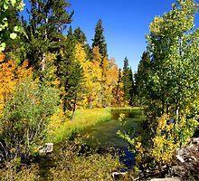 Colorful Fall Days by marilyn diaz
