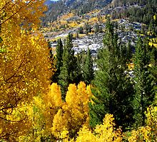 Still Gold In The Sierras by marilyn diaz