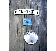 Power Line Tags Photographic Print