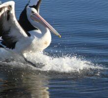 Pelican Landing Sticker