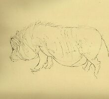 Pot-bellied pig by Cameron Hampton