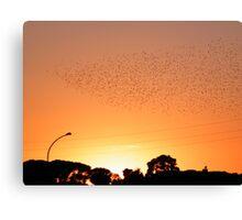 migration... Canvas Print