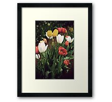 Coloured bunch Framed Print