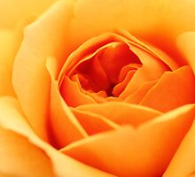 Roses - Up Close and Personal by Irina Chuckowree