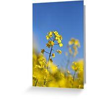 Canola Farming - Wongan Hills Western Australia Greeting Card