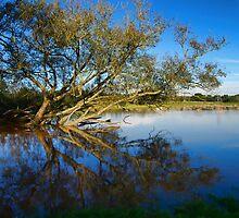 Flooded tree by peteton