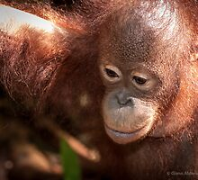 97% of our own DNA by Orangutans