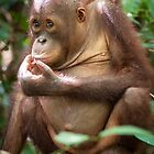 SAY NO TO PALM OIL by Orangutans