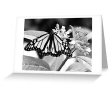 Monarch. Greeting Card