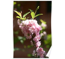 Spring is also surrounding my house!  Poster