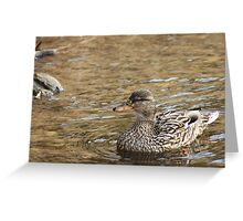 Duck Greeting Card
