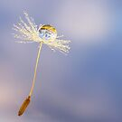 Dandelion Sky Drops by Gazart