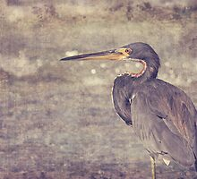 Tri Colored Heron Textured by cesstrelle