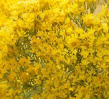 Rabbitbrush by Betty  Town Duncan