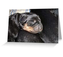 A New Arrival - Rottweiler Puppy Greeting Card