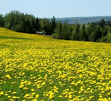 Field of Gold by Kathleen Daley