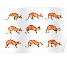 Red Kangaroo in Motion Poster