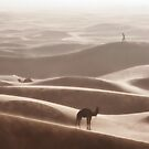 Where are my camels ? by Yannick Verkindere