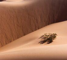 Dune 05 by Yannick Verkindere