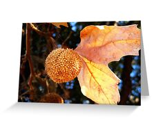 Autumn Sycamore Greeting Card