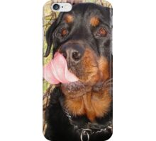 Large Male Rottweiler Licking His Lips iPhone Case/Skin