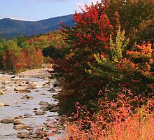 Fall Color in the White Mountains by Roupen  Baker