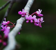 Spring in the Air by Cforster