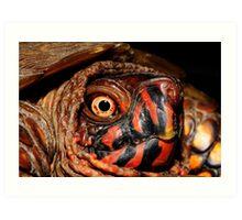 Darth Maul Turtle Art Print