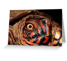 Darth Maul Turtle Greeting Card
