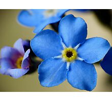 Forget-Me-Nots 11 Photographic Print