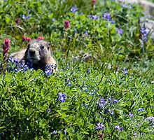 One Must Always Take Time to Stop And Smell The Flowers by TeresaB