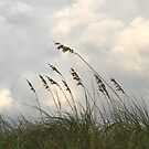 Sea Oats by BlinkImages