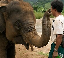 Elephant and mahout by Paris Franz