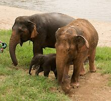 Elephant Family by Paris Franz