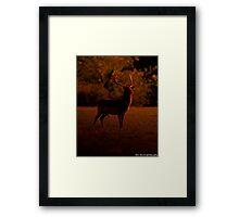 ruler of the forest Framed Print