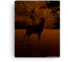 ruler of the forest Canvas Print