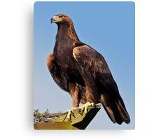 Claws (Golden Eagle) Canvas Print