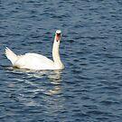 Swan in the ocean by Amanda Reed