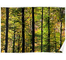 Swiss Autumn Forest Poster