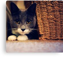 Russian Blue cross Canvas Print