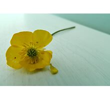 The Buttercup Photographic Print