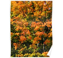 Fabulous Fall Poster