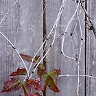 Dead Vines by Karen Jayne Yousse