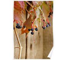 Hanging Grapes Poster