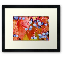 Vibrant Grape Vines Framed Print