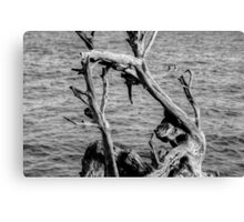 Looking at the Sea... Forever Canvas Print