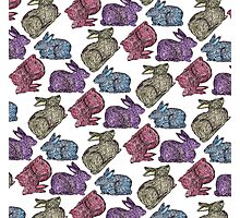 Bunnies! Photographic Print